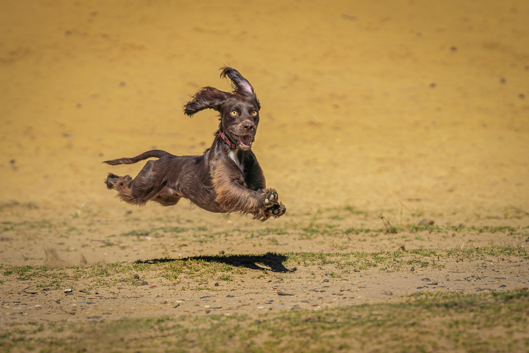 Dog Photographer Teignmouth